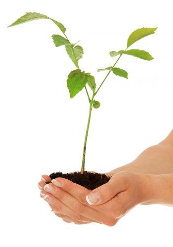 ROTERS Umwelt - Hand mit Pflanze